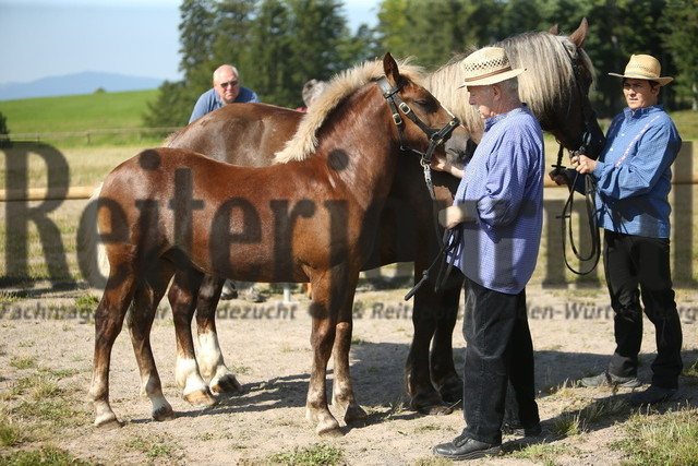 Sankt_Märgen_2021_Fohlen_KN_16 (1)