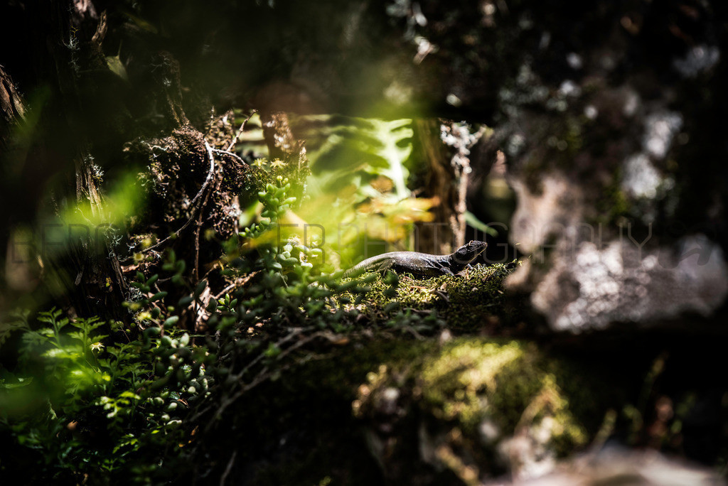 Eidechse im Wunderland   Eidechse in märchenhafte Umgebung