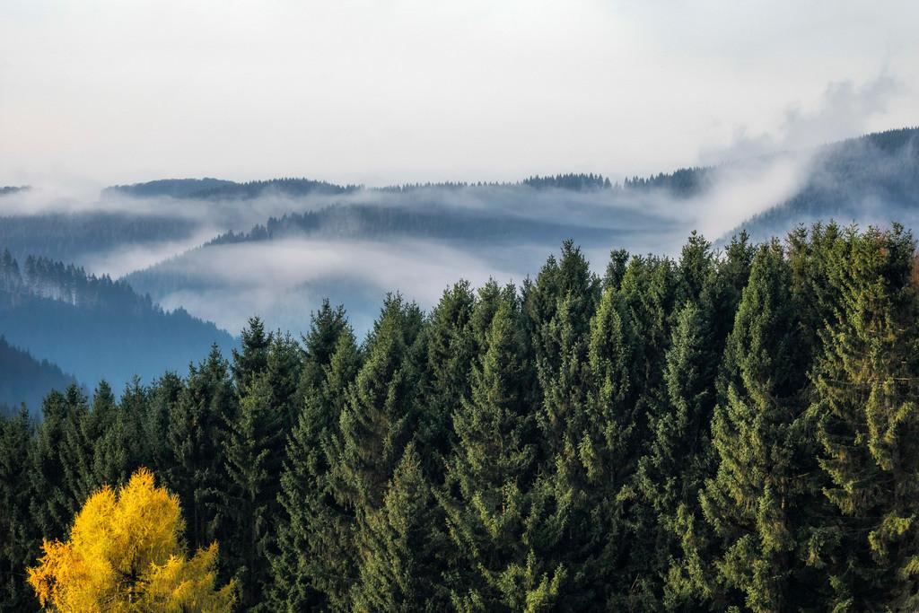 Harzer Bergwelt | Das Foto wurde in Sankt Andreasberg gemacht.