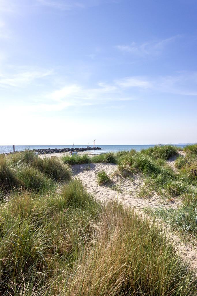 Strand in Damp | Strandhafer am Strand in Damp