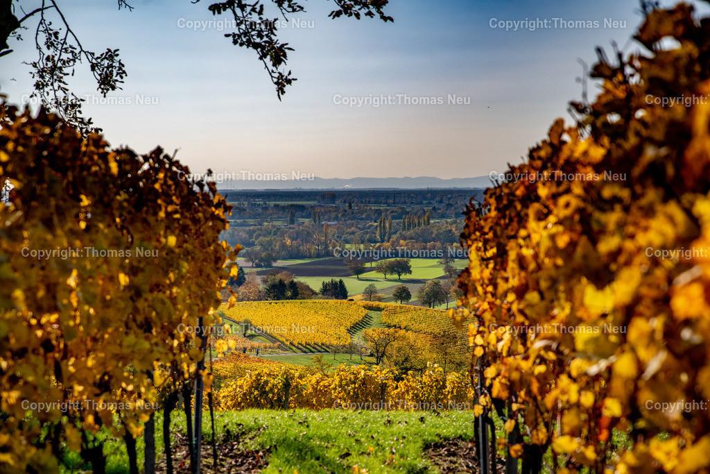 DSC_9821   Herbst an der Hessischen Bergstrasse,  Weinberge zwischen Bensheim und Heppenheim, goldener Oktober, indian summer, ,, Bild: Thomas Neu
