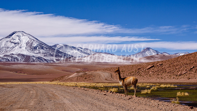 Atacama 009