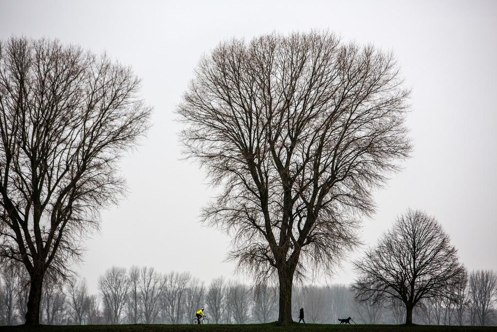 JT-130225-022 | Tristes Winterwetter, Nebel, kahle Bäume, Rheindamm bei Düsseldorf-Stockum. Radfahrer und Mann mit Hund beim Spaziergang.