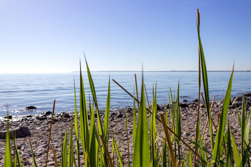 Strand in Kleinwaabs | Gras am Strand in Kleinwaabs