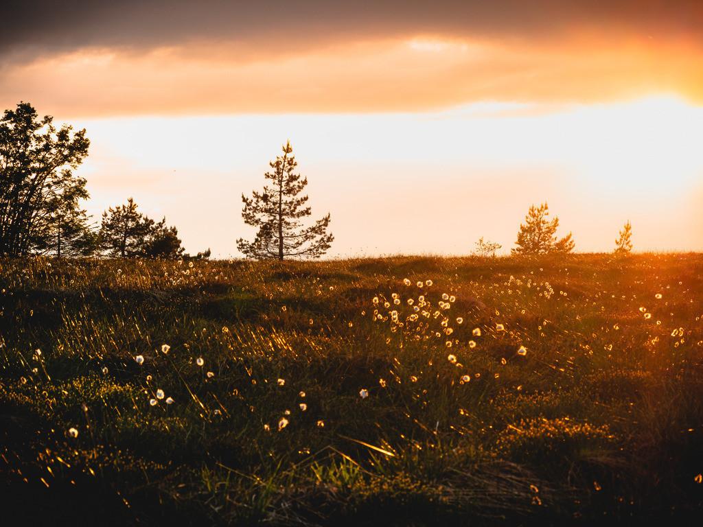 Hornisgrinde | Sommerabend auf der Hornisgrinde im Nationalpark Schwarzwald