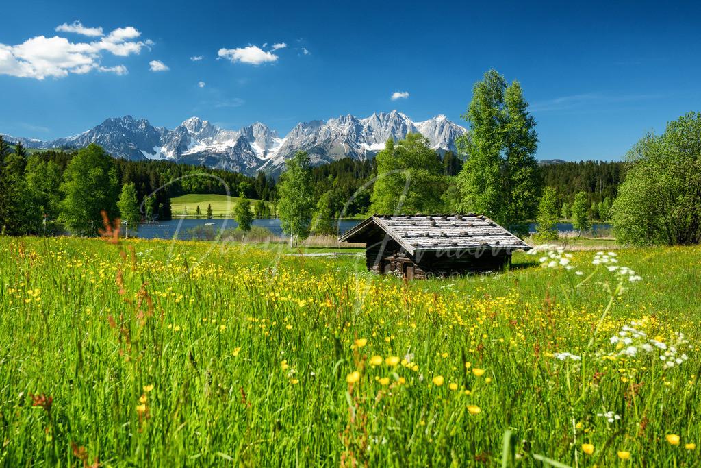 Schwarzsee | Blumenwiese am Schwarzsee mit Blick zum Wilden Kaiser