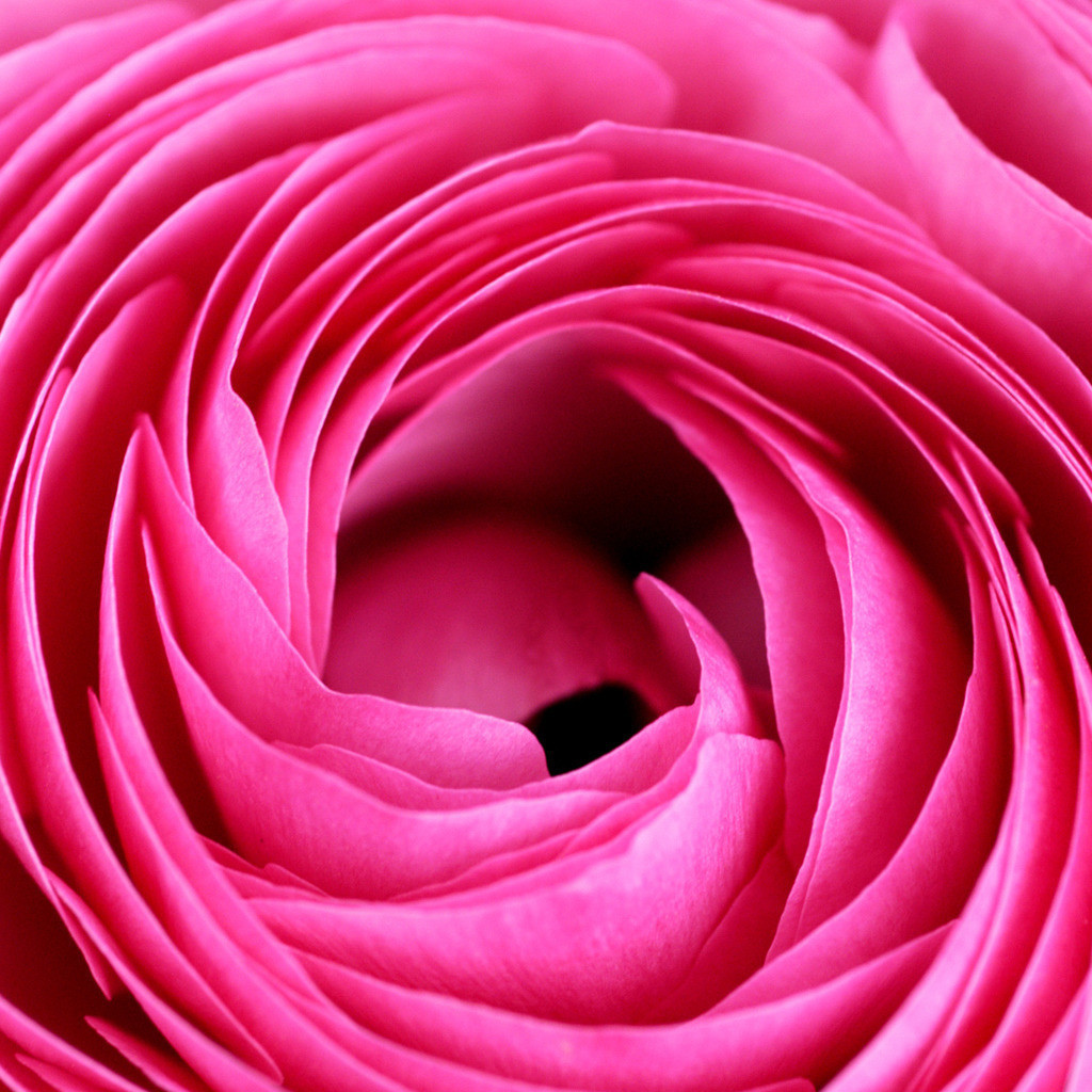 Best. Nr. Blütenpracht02 | Ranunkel