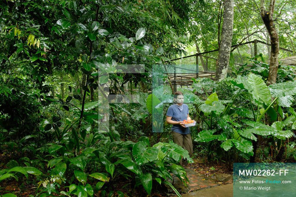 MW02262-FF | Vietnam | Provinz Ninh Binh | Reportage: Endangered Primate Rescue Center | Tierpflegerin mit Gemüse für die Affen, das noch geschnitten wird. Der Deutsche Tilo Nadler leitet das Rettungszentrum für gefährdete Primaten im Cuc-Phuong-Nationalpark.    ** Feindaten bitte anfragen bei Mario Weigt Photography, info@asia-stories.com **
