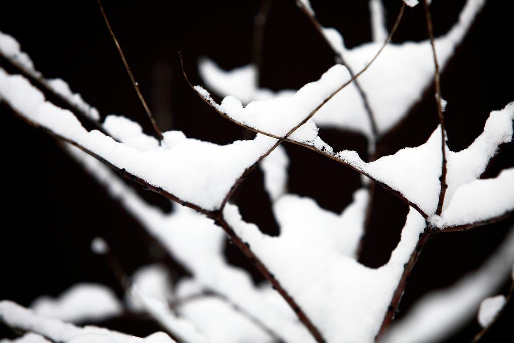 Winter | Verschneite Aeste eines Baumes.