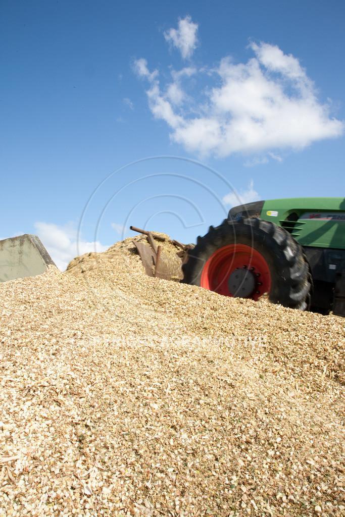 20080914-IMG_9107 | Silomais wird gehäckselt - AGRARFOTO Bilder aus der Landwirtschaft