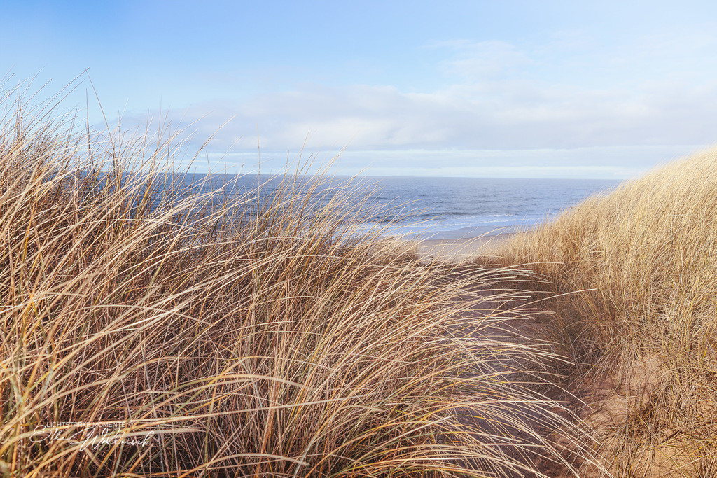 Summerfeeling im Januar | Dünenlandschaft am Roten Kliff, Sylt