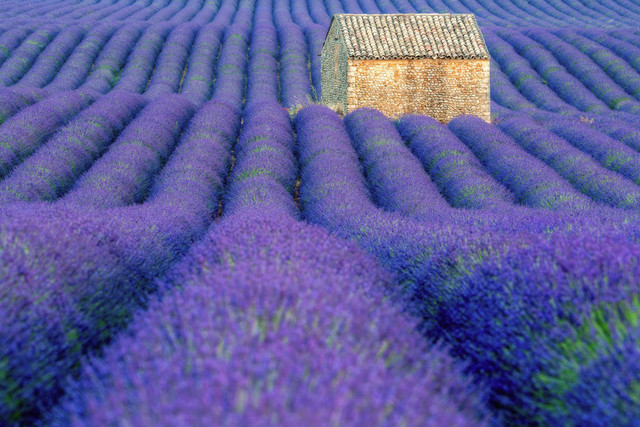 lonely house   Valensole - PRovence, France