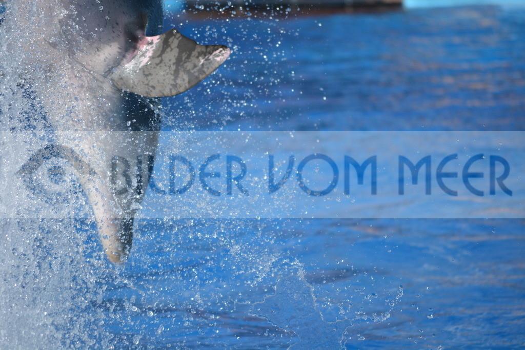 Delfin Bilder | Foto springender Delfin