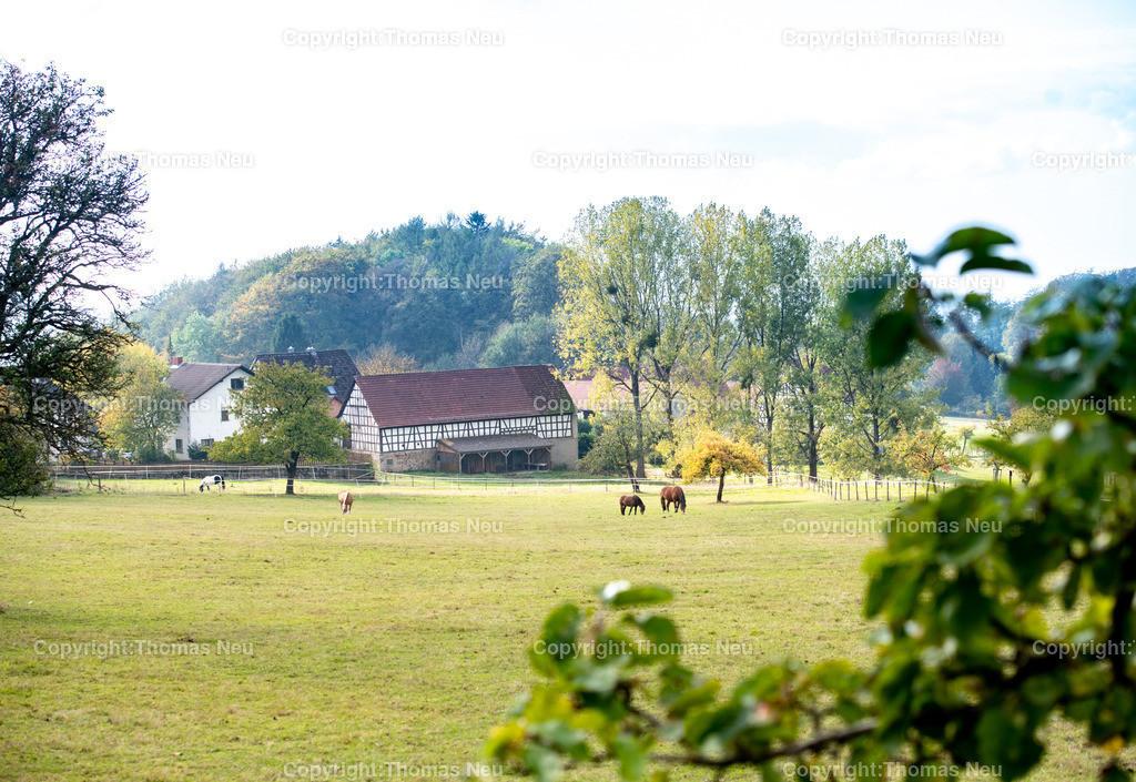 DSC_8546 | bli,Odenwaldidylle , Tourismus, Blick auf Knoden, weidende Pferde,Herbststimmung,  ,, Bild: Thomas Neu
