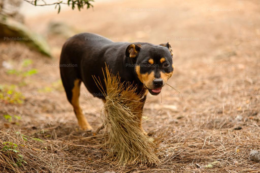 Strassenhunde-1-9