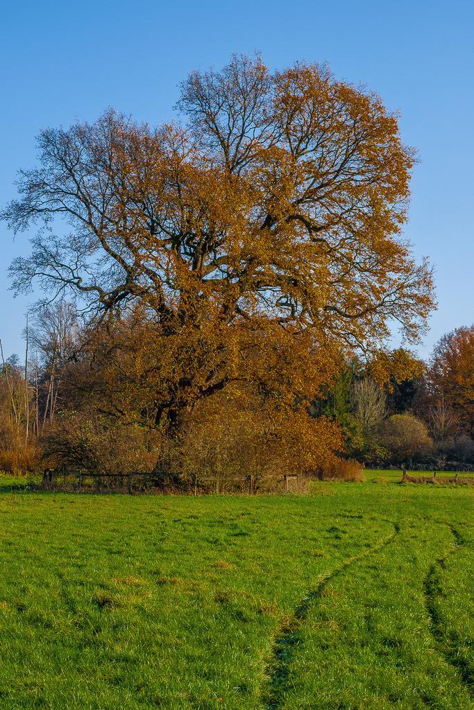 Schloss_Bloemersheim_231120_11