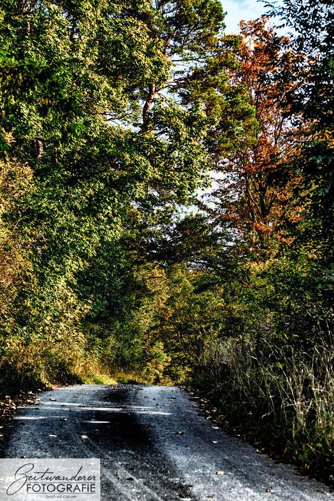 Waldweg | Ein Waldweg inmitten eines kleinen Waldes.