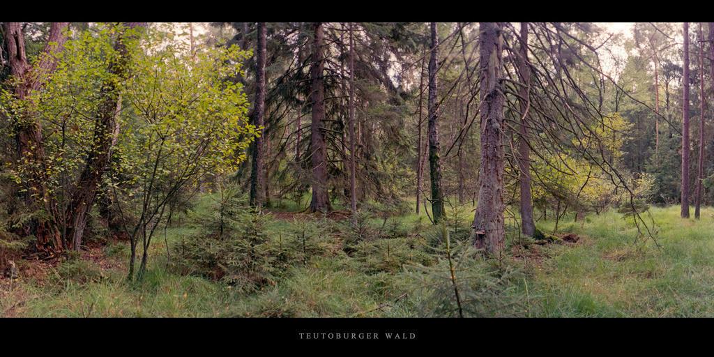 Teutoburger Wald | Lichtung mit Mischwald im Teutoburger Wald