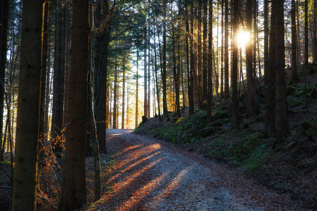 Spiel mit Licht und Schatten | Auf dem Weg zum Kranzhorn, magisches Gegenlicht im Wald.