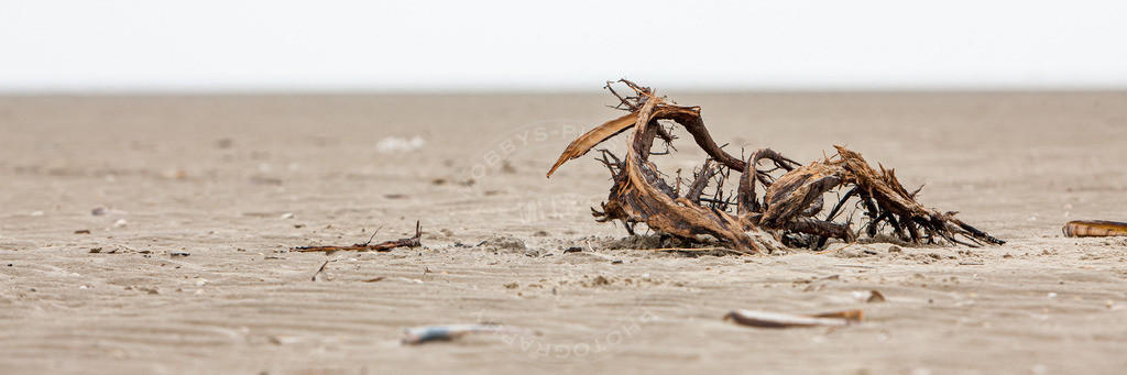 MOBY0580 | Nature Strandgut