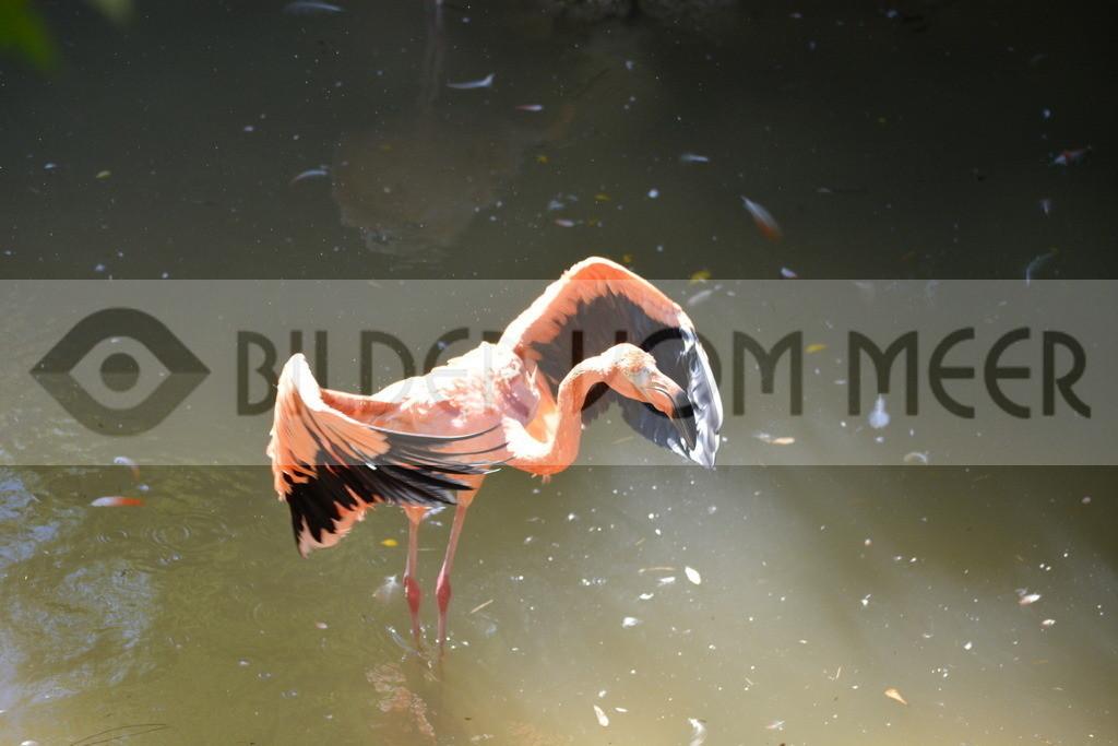 Flamingo Art Bilder | Rote Flamingo Art Bilder