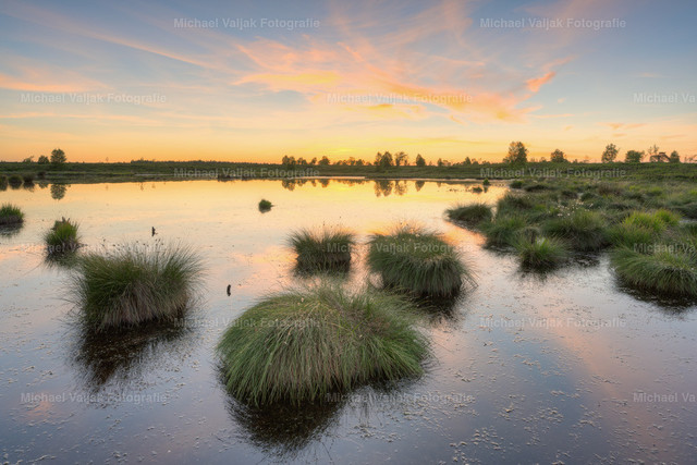 Abends im Hohen Venn in Belgien | Nach Sonnenuntergang im Brackvenn, einem Hochmoor im Hohen Venn in Belgien.