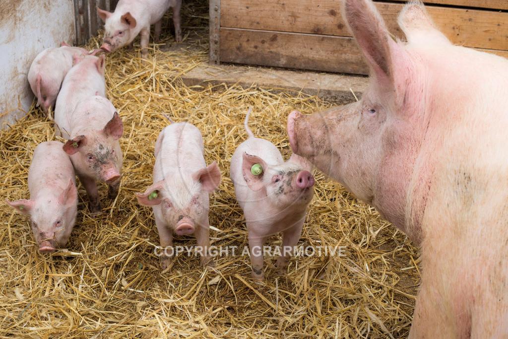 20160705-IMG_7934 | glückliche Schweine