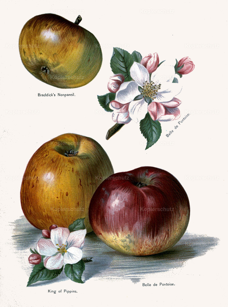 Fruit-Growers-Guide-1890-May-Rivers-Obst-Früchte (13)