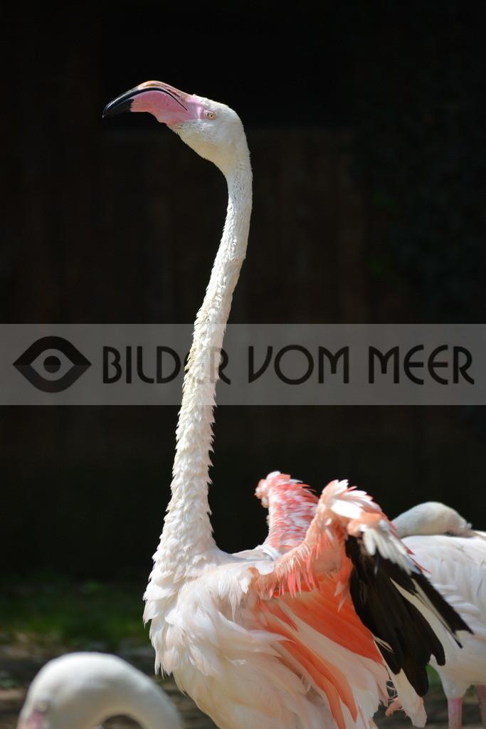 Flamingo Bilder | Rosa Flamingo Bilder