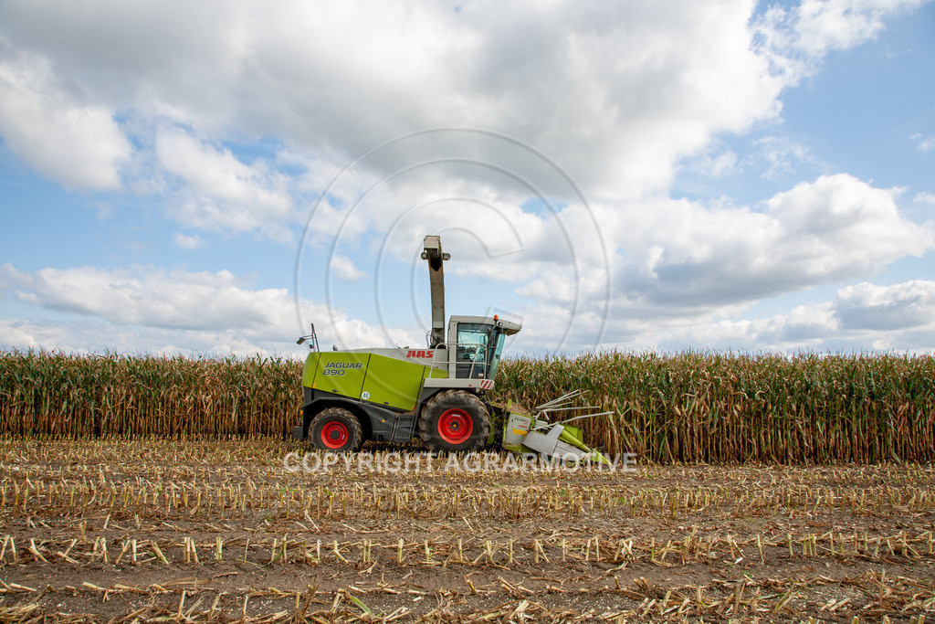 20080914-IMG_9026   Silomais wird gehäckselt - AGRARFOTO Bilder aus der Landwirtschaft