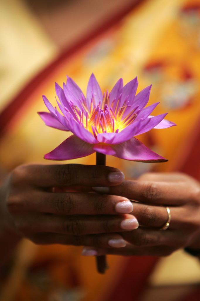 Siddhalepa Ayurveda Resort  | Sri Lanka, Hand mit Lotusblüte,