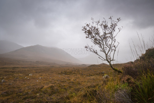 Sligachan Tree