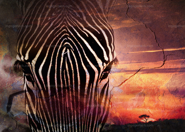 african dreams8