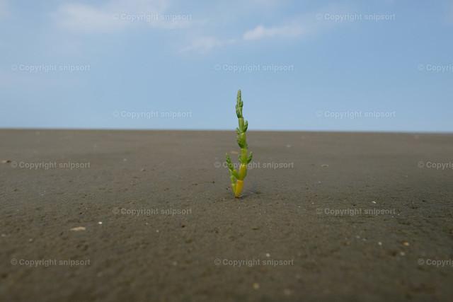 Eine einsame Pflanze im Sand | Ein einsamer Pflanzenstengel inmitten von Sand.
