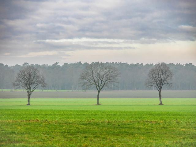 Celle 07.01.2021 (3) | exlusive Natur- Landschafts- und Makrofotografie aus Celle