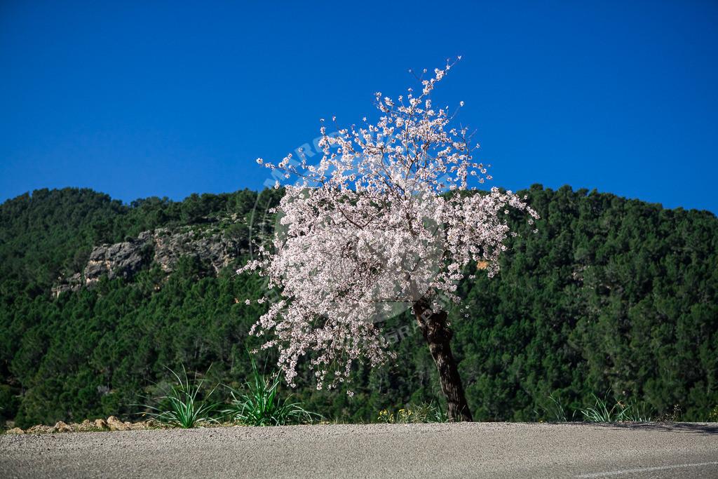 MR201204290090_MI1   Impressionen Mallorca