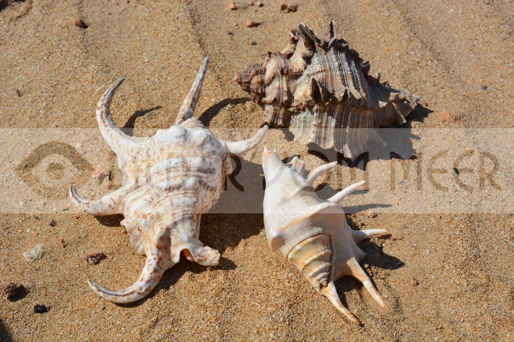 Muscheln im Sand | Muschel Bilder am Meer