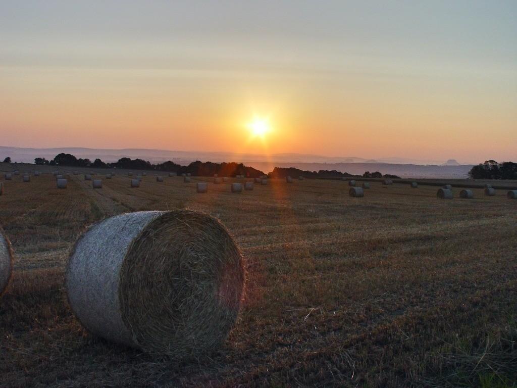 Sonnenuntergang über abgemähtem Feld