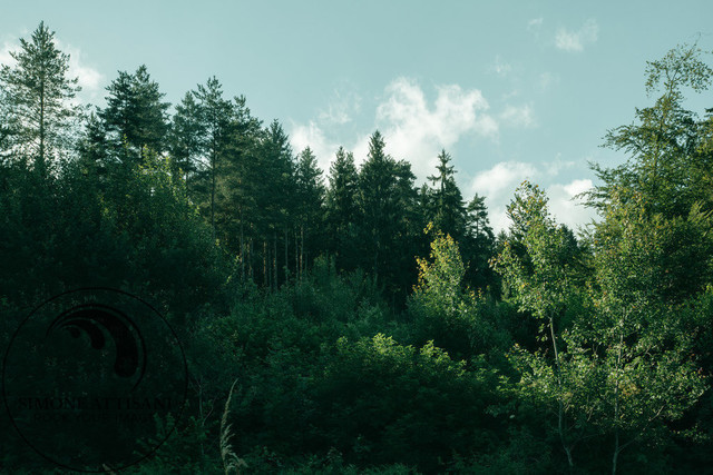 A place in the woods | Ein Stück Wald