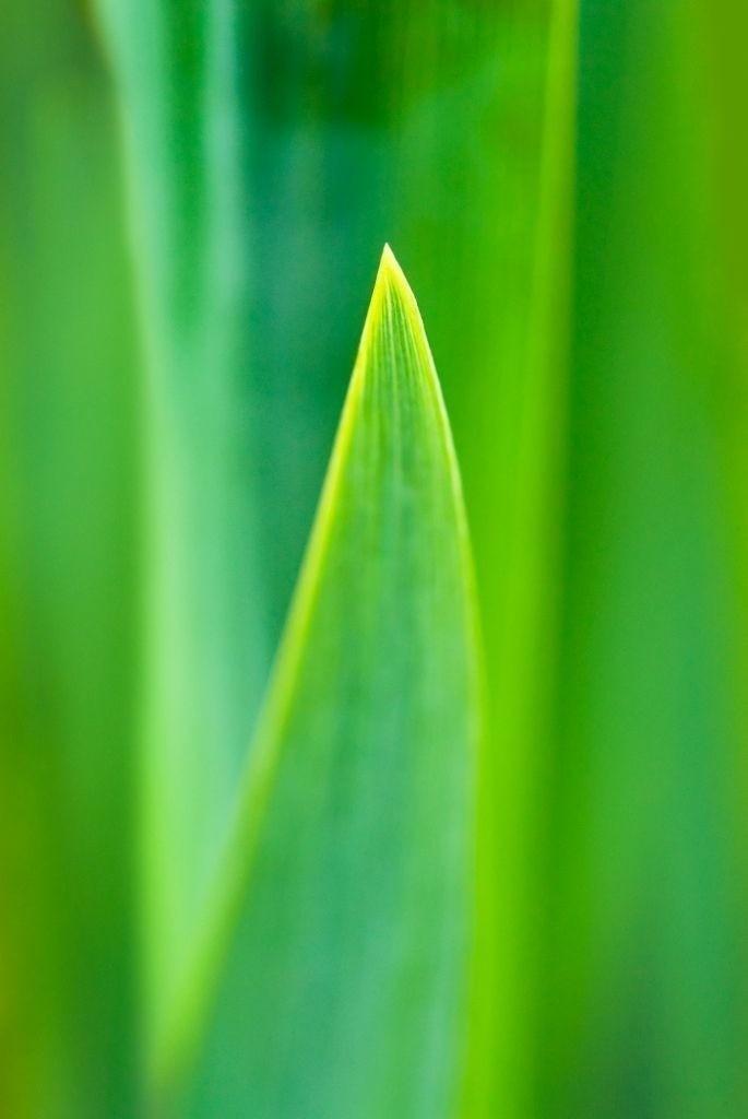 Anerkennung 12 | Wasserlilienblatt
