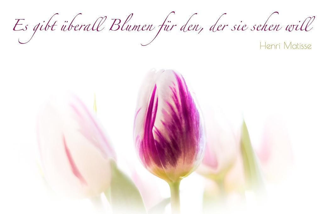 Tulpe mit Zitat von Henri Matisse