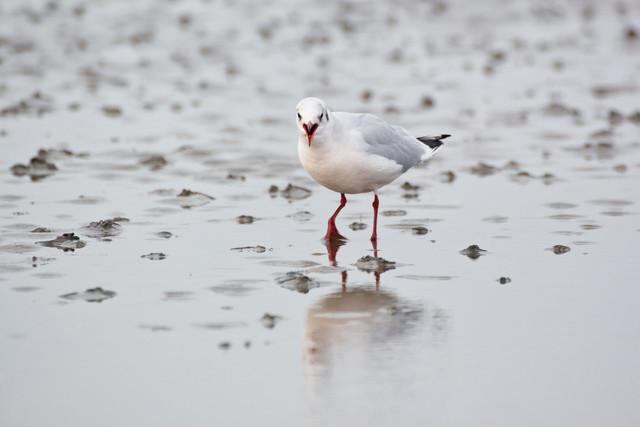 cuxhaven-strand-moewe