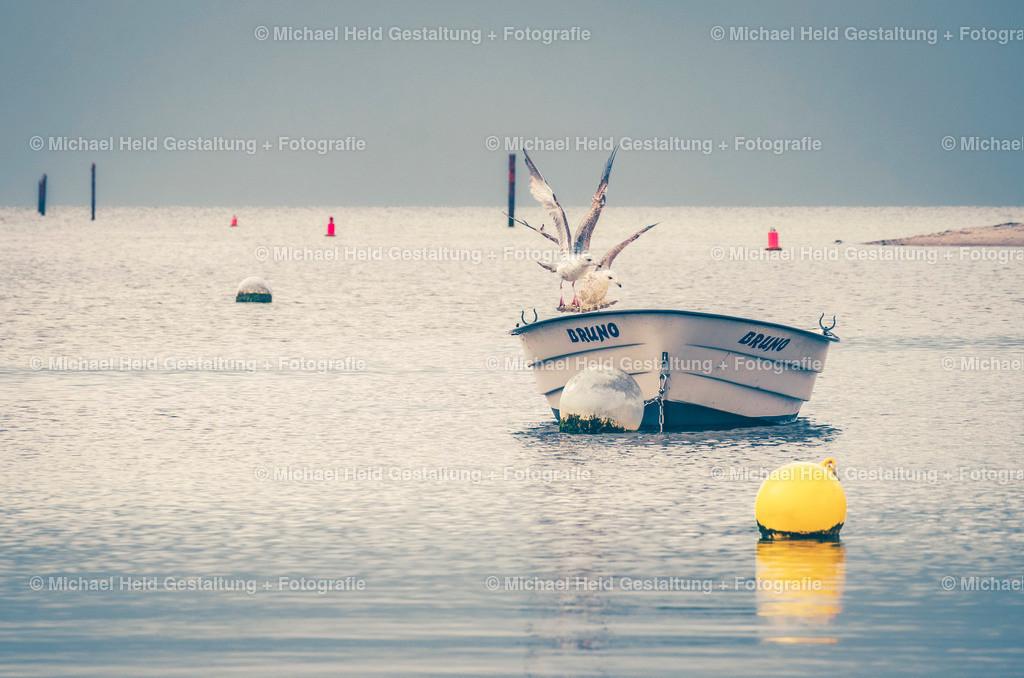 Boot an der Ostsee | Möwen auf einem Angelboot an der Ostsee in der Marina Wendtorf