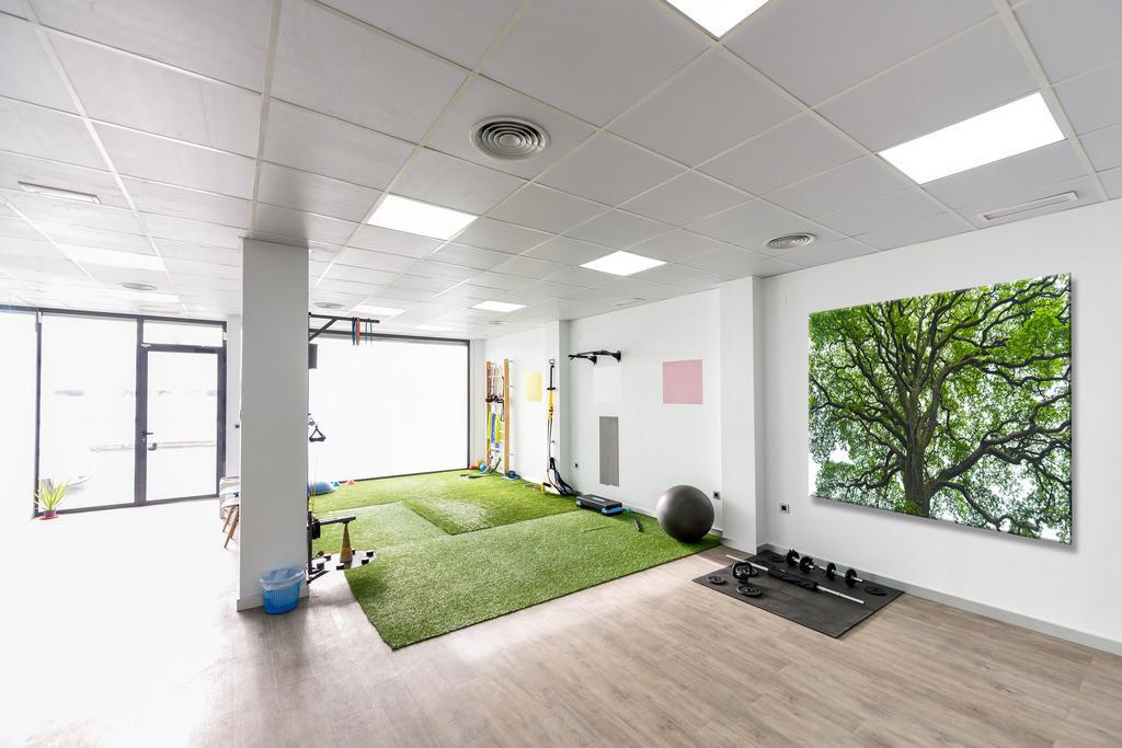 Baumbild für einen Reha-Raum | Anwendungsbeispiel für einen Physiotherapieraum. Sie finden dieses Motiv in der Galerie Farben und Formen - Bäume und Grün