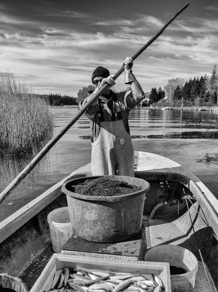 Matthias Nanz – ein Fischer an der Schlei © Holger Rüdel   Matthias Nanz aus Schleswig ist einer der letzten Berufsfischer an der Schlei. Hier kehrt er Ende April von einer Fangfahrt auf der Großen Breite der Schlei zurück und bereitet sich auf das Anlegen an seinem Liegeplatz in Missunde vor.