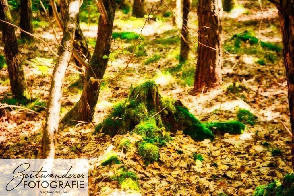 Forest IMG_9336
