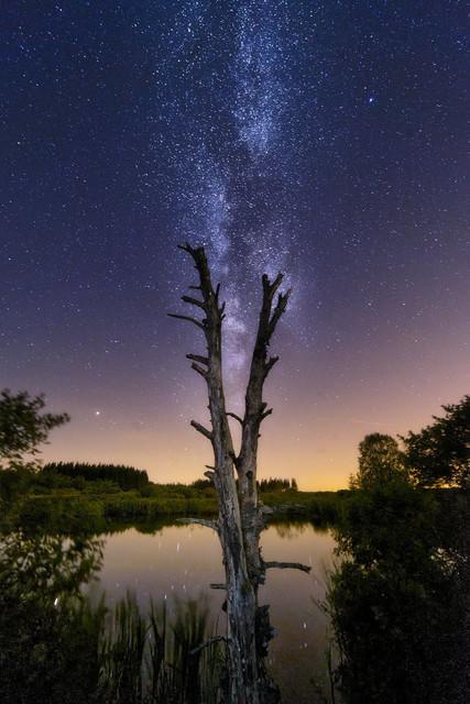 Himmelwärts | Dieser einsame Baum im Venner Hochmoor streckt seine beiden Stämme in die Höhe als wolle er die Arme der perfekt senkrecht stehenden Milchstraße ergreifen.
