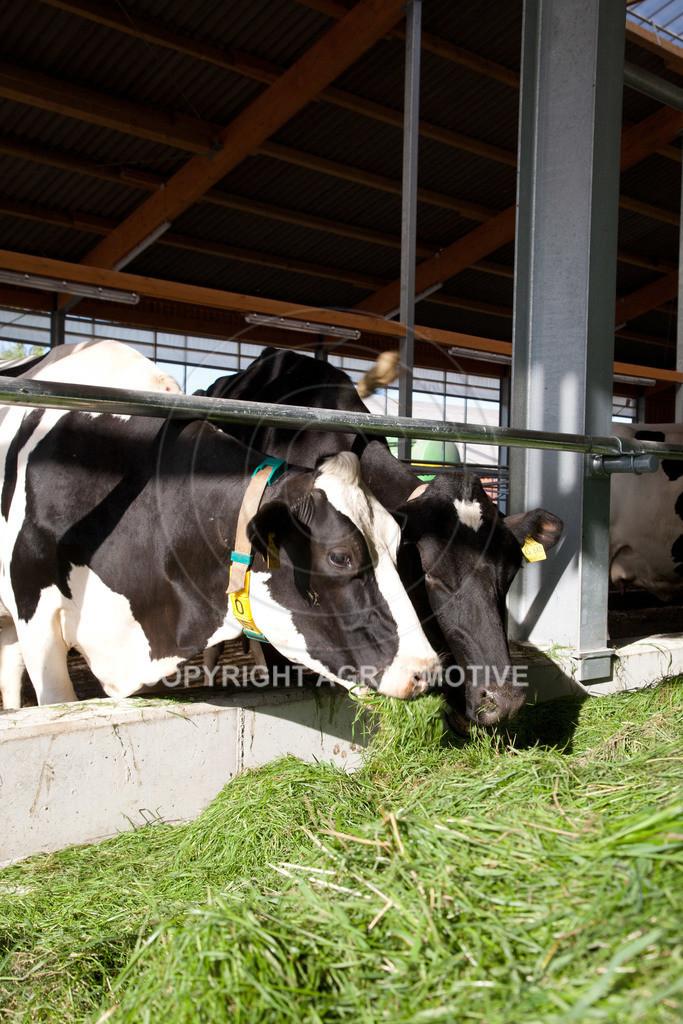 20110627-IMG_2991 | Milchkühe im Boxenlaufstall