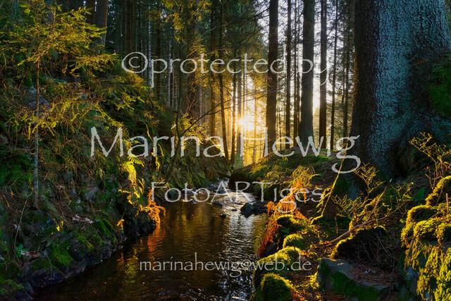 Harzwald01618_MarinaHewig