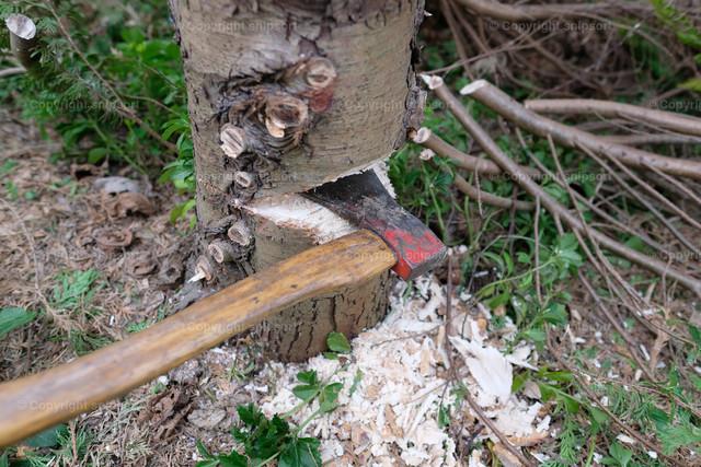 Baumfällung | Eine Axt steckt in einer angefangenen Kerbe, um einen Baum zu fällen.